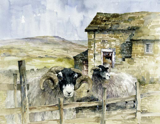 John Sibson Tup and Ewe